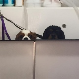 Cheeky Dog Bath