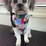 Cute Dog 4