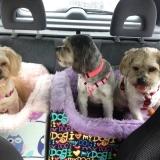 Doggo in Car
