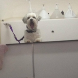 Crazy Bath Dog