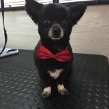 Cute Dog 3